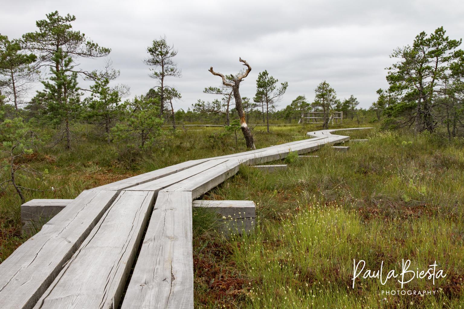Kemeri Bog - Letland - Juli 2016
