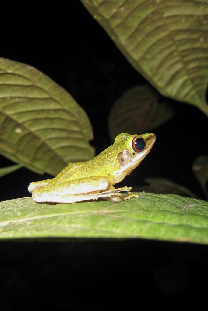 Op zoek naar dieren langs de Kinabatangan Rivier
