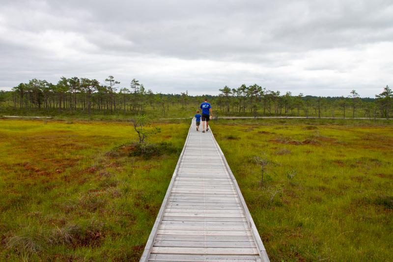 Wandelen door het moeras van Riisa