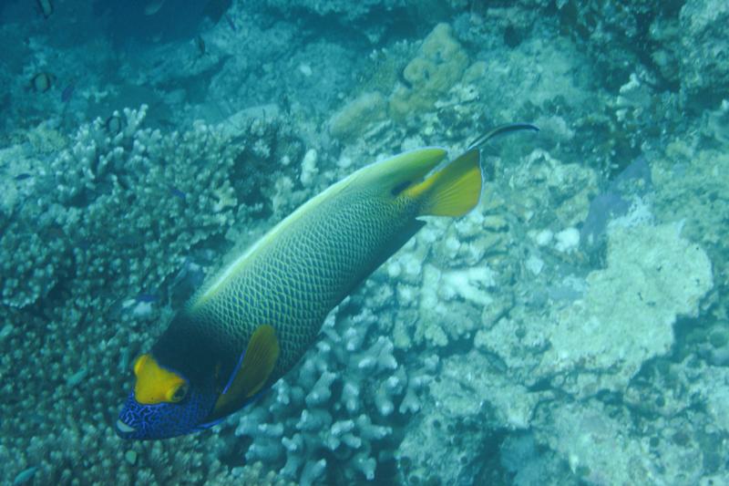 Duiken tussen de haaien en schildpadden bij Sipadan