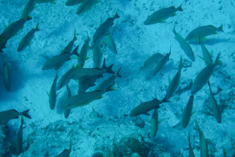 De onderwaterwereld van Jacques Cousteau